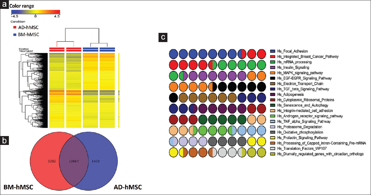 Figure 2: Microarray gene expression profiling of BM-MSC versus AD-MSC. (a) Heat map analysis and unsupervised hierarchical clustering were performed on expressed genes in BM-MSC versus AD-MSC. Each column represents one replica and each row represents a transcript. Expression level of each gene in a single sample is depicted according to the color scale. (b) Venn diagram illustrating the overlap between genes expressed in BM-MSC and AD-MSC. (c) Illustration of the top twenty enriched pathways performed on genes commonly expressed by BM-MSC and AD-MSC. BM-MSC: Bone marrow-derived human stromal stem cell, AD-MSC: Adipose-derived human stromal stem cell